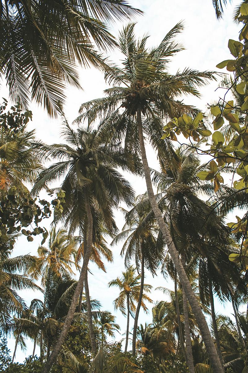 Flaviana Boni Viaggio alle Maldive